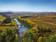 EN BAJA Vinedo_Rioja_BañosEbro